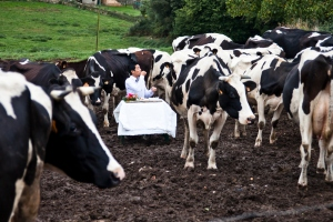 pepe_cow